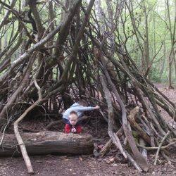 woodland-fun